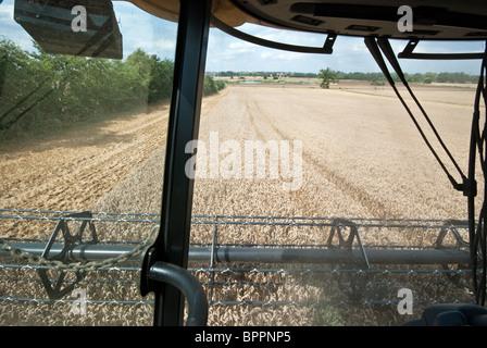 Blick aus der Kabine ein kombinieren Harvester Ernte Weizen in Essex - Stockfoto