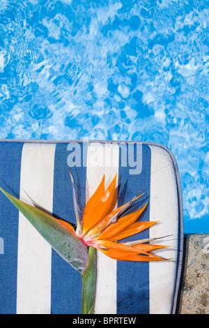 Strelitzia Blume durch einen blauen pool - Stockfoto