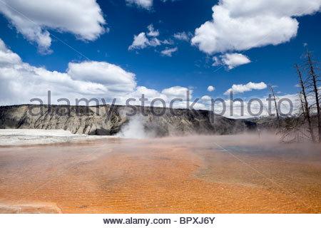 Mammoth Hot Springs - Hauptterrasse, Yellowstone-Nationalpark, Wyoming - Stockfoto