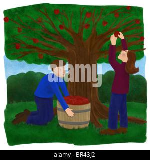 Zwei Menschen, die Äpfel vom Baum pflücken - Stockfoto
