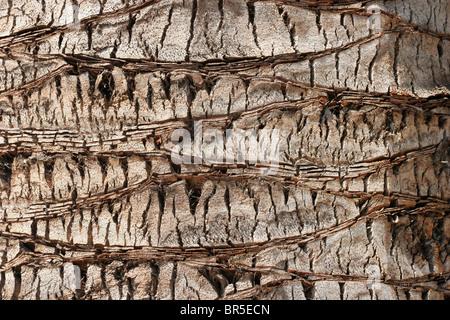 Muster in der Rinde einer Palme - Stockfoto