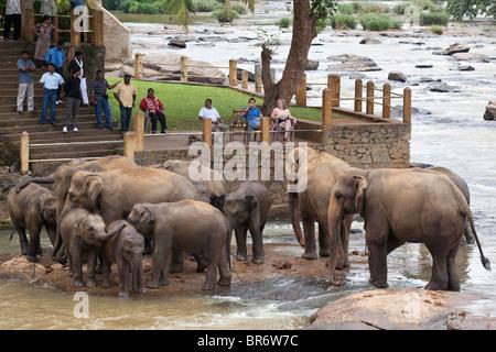 Beobachten Elefanten Baden im Fluss Maha Oya Touristen in der Nähe von The Pinnawela-Elefantenwaisenhaus - Stockfoto