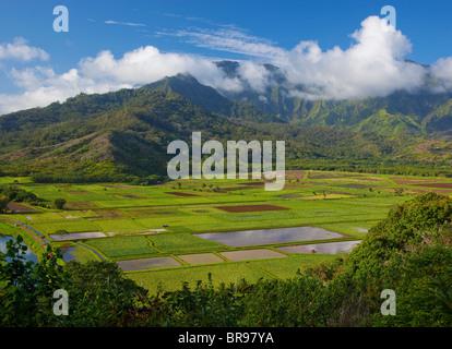 Kauai, HI Ansicht von Hanalei Tal Taro-Felder und Mittelgebirge in Morgensonne, Hanalei National Wildlife Refuge - Stockfoto