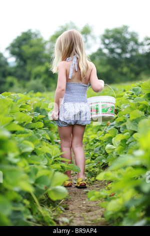 Kleines Mädchen pflückt Erdbeeren in einem Erdbeerfeld - Stockfoto