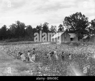 1930ER JAHRE AFRO-AMERIKANISCHE FAMILIE AUF MIETER BAUERNHOF PFLÜCKEN BAUMWOLLE IN SOUTH CAROLINA - Stockfoto