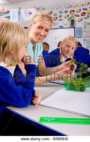 Lehrer und Schülerinnen und Schüler betrachten Pflanzen Setzlinge im Klassenzimmer - Stockfoto