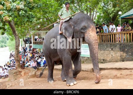 Touristen und Einheimische beobachten Elefanten in der Nähe von The Pinnawela-Elefantenwaisenhaus - Stockfoto