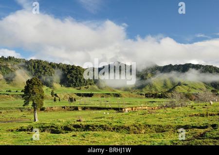 Ackerland, in der Nähe von Matawai, Gisborne, Nordinsel, Neuseeland - Stockfoto