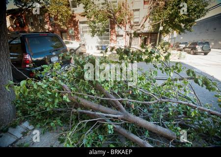 Äste in der Carroll Gardens, Brooklyn in New York erwarten Abholung nach der Entnahme aus Bäumen, die durch einen - Stockfoto