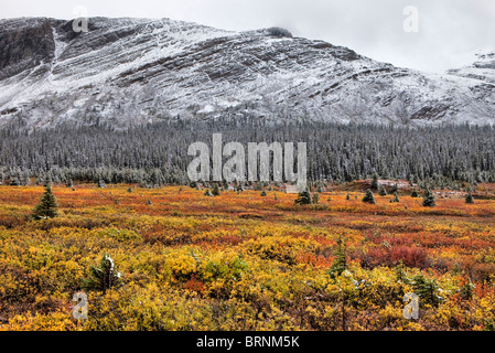 Erster Schnee in Alta Herbst, Banff Nationalpark, Kanada - Stockfoto
