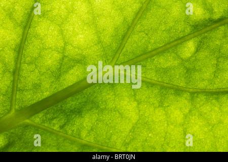 Makro von einem grünen Blatt Hintergrund - Stockfoto