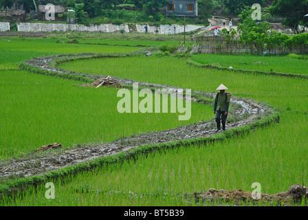 Landwirt zu Fuß durch Reisfelder in der Nähe von Sapa, Vietnam - Stockfoto
