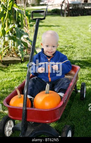 2 Jahre alter Junge in rot Radio Flyer Wagen mit Kürbissen. - Stockfoto