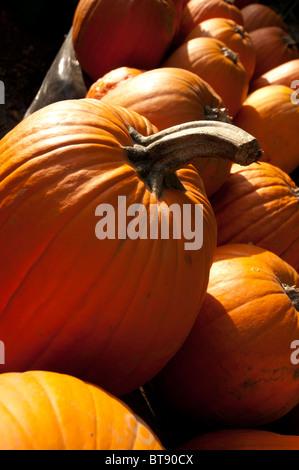 Einige Kürbisse zum Verkauf Baden im Herbst Sonnenlicht - Stockfoto