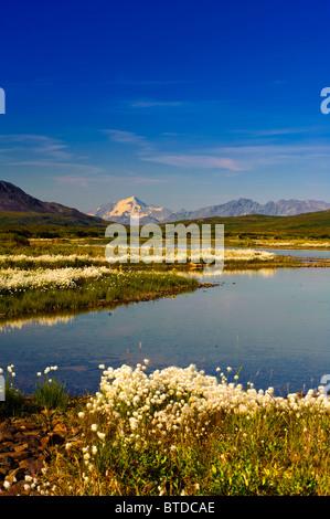Blick auf die Alaska Range vom Denali Highway mit Wollgras im Vordergrund, innen Alaska, Sommer