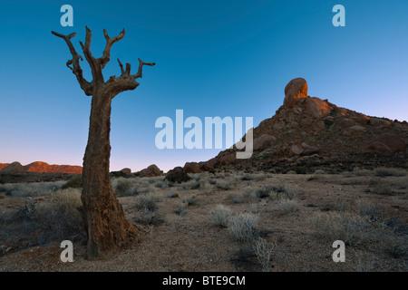 Launisch Wüstenlandschaft mit einem blattlosen Köcherbaum (Aloe Dichotoma) im Vordergrund - Stockfoto