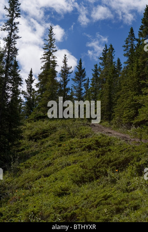 Jasper Alberta rocky Mountain Park Wanderwege - Stockfoto