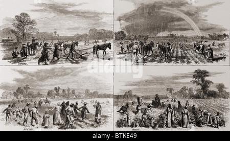 Nach dem Bürgerkrieg weiterhin viele Afro-Amerikaner auf den Plantagen zu arbeiten, wo sie Sklaven gewesen waren. - Stockfoto