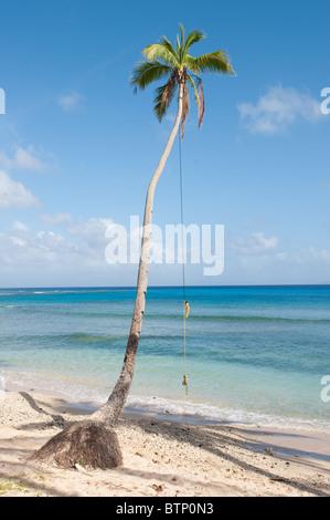 Seil schwingen.  Taveuni, Fidschi - Stockfoto