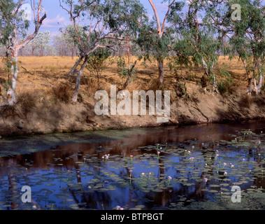 Australien-WA Pilbara Billabong - Stockfoto