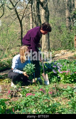 Paar Pflanzen Garten im Frühjahr mit blühenden Glockenblumen und blutenden Herzen - Stockfoto