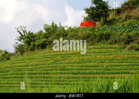 China - Drachen Rückgrat Reisterrassen - Stockfoto