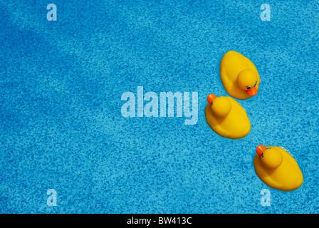 Drei Quietscheentchen schweben auf dem Aquamarin Blau Wasser in einem Schwimmbad. - Stockfoto