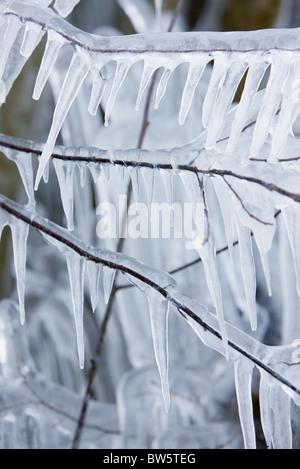 Eiszapfen hängen von Zweigen - Stockfoto