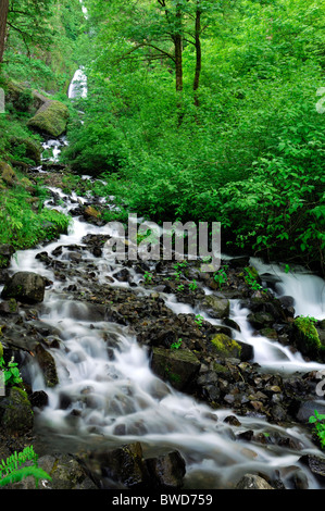 Fluss-Stream unter oberen Schachtelhalm Falls Wasserfall Columbia River Gorge Oregon Historic Columbia River Highway - Stockfoto