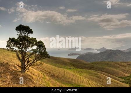 Sanfte Hügel und Baum mit Hintergrund-Inseln, Neuseeland Coromandel region - Stockfoto