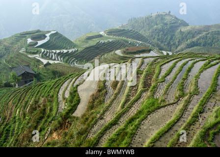 Reisterrassen von Longsheng, Guangxi, China - Stockfoto