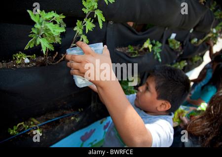 Woolly Pocket vertikalen Garten Kleiderbügel in der Innenstadt von Wert Schule, eine Charta der Schule in der Innenstadt - Stockfoto
