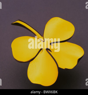 Silvester Eves symbol Glück Glücksbringer Glück Glück 4-blättrige Kleeblatt Kleeblatt gold - Stockfoto