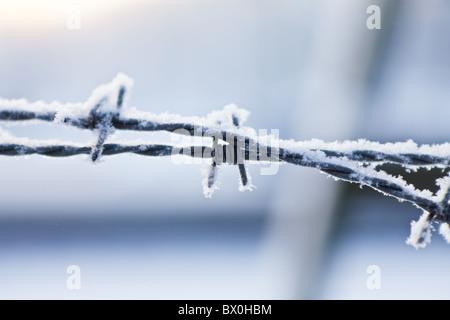 Stacheldraht bedeckt in frost - Stockfoto