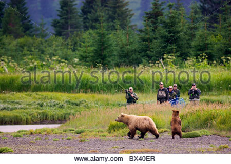 Eine braune oder Grizzly Bear, Lake-Clark-Nationalpark, Alaska. - Stockfoto