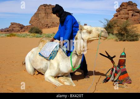 Tuareg-Männer, die Befestigung des Sattels auf dem Rücken eines Mehari Dromedar vor der Fahrt, Sahara Wüste, Libyen - Stockfoto