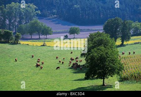 Frankreich, Périgord Vert, Dordogne, um Riberac - Stockfoto