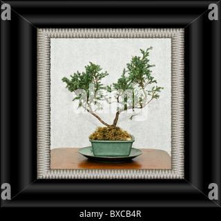 Bonsai Baum, Skizze für Interior Design Stockfoto, Bild: 33463599 ...