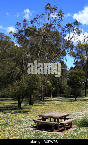 Picknick-Tisch zwischen Bäumen und weißen Blüten im Tower Hill National Park, Victoria, Australien - Stockfoto