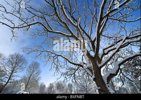 Zweige der Baumkrone mit Schnee bedeckt im Winter, Belgien - Stockfoto