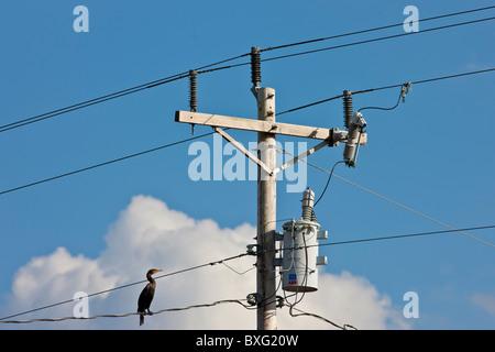 Vögel auf die Kabel ein Strom-Mast in Florida Stockfoto, Bild ...