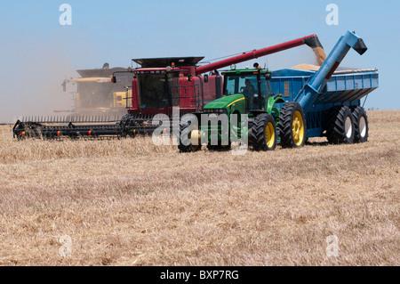 Weizen Ernte im äußersten Westen New South Wales, Australien - Stockfoto