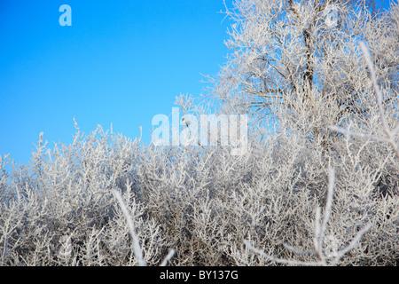 Herrliche Winterlandschaft mit Schnee und den blauen Himmel. - Stockfoto