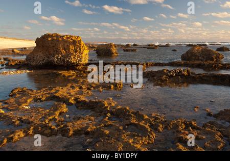 Sonnenuntergang am großen Aufschlüssen von Toten auf einem alten Korallenriff am Strand von Quobba Station, Carnarvon, - Stockfoto