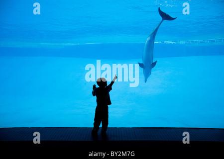 Ein Junge genießt das Unterwasser Fenster an einen lokalen Aquarium, wo Delfine in dem blauen Wasser schwimmen. - Stockfoto
