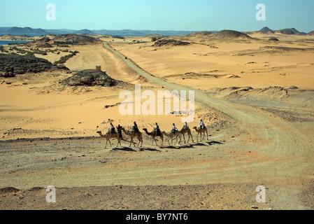 Dromedar Kamele in der Nähe von Lake Nasser, Nubien, Oberägypten, Afrika. - Stockfoto
