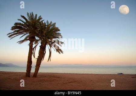 Zwei Palmen am Strand, Mond, Dahab, Rotes Meer, Ägypten, Afrika - Stockfoto