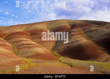 USA, Oregon, John Day Fossil Betten Nationaldenkmal. Chaenactis Blumen Linie gestreift Tongestein Hänge des Referats - Stockfoto