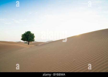 RUB' al Khali Wüste an der Grenze zwischen Oman und im Emirat Dubai, Mittlerer Osten, Südwestasien - Stockfoto