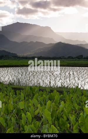 Überfluteten Taro-Felder und Berge. Überfluteten Felder von Taro im Hanalei River Valley etwas außerhalb von Hanalei - Stockfoto